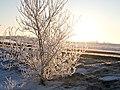 Tree on Ice (3266753116).jpg