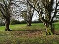 Trees, McCauley Park - geograph.org.uk - 1196390.jpg