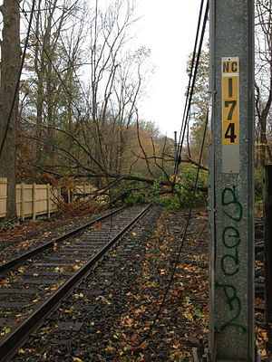 Effects of Hurricane Sandy in New England - A fallen tree in Fairfield County, Connecticut