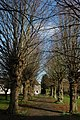 Trees in Hinton on the Green churchyard - geograph.org.uk - 1198502.jpg