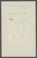 Triaenophorus nodulosus - - Print - Iconographia Zoologica - Special Collections University of Amsterdam - UBAINV0274 105 18 0006.tif