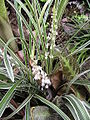 Tropical small flowers.JPG