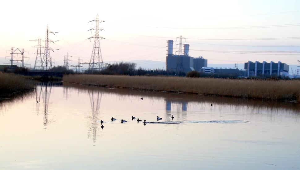 Tufted Ducks at Newport Wetlands RSPB Reserve Floating Walkway