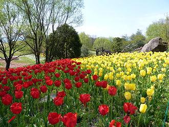Kagawa Prefecture - Sanuki Manno National Park
