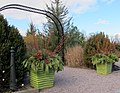 U.S. Botanic Garden at the Holidays (23363245174).jpg