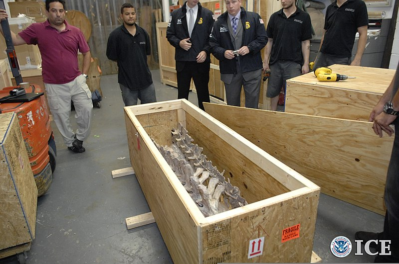 File:U.S. Immigration and Customs Enforcement (ICE) officials return a Tarbosaurus bataar skeleton to the government of Mongolia during a repatriation ceremony May 6, 2013, at a Manhattan hotel in New York 130506-H-ZZ999-002.jpg