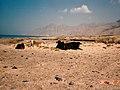 UAEペルシャ湾沿いの砂漠に放牧されている牛 - panoramio.jpg