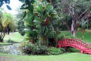 San Juan Botanical Garden - The rare red sealing wax palm from Malaysia can be found in the Botanical Garden's Aquatic Garden.