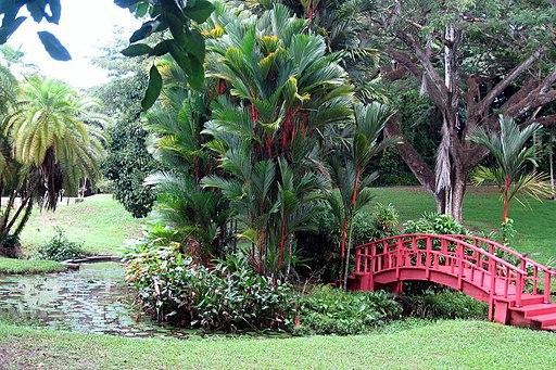 Lipstick palm for Bodas en el jardin botanico de caguas