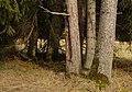 Unterhölzer Wald-3424.jpg