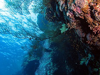 Marsa Alam - Image: Up through black coral bush