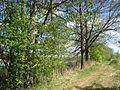 Upper Lusatian Heath and Pond Landscape. Oberlausitzer Heide- und Teichlandschaft. Landkreis Görlitz, Saxony, Germany. - panoramio.jpg