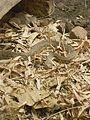 Van Vihar National Park Reptile.jpg