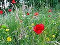 Verge flowers 2.JPG