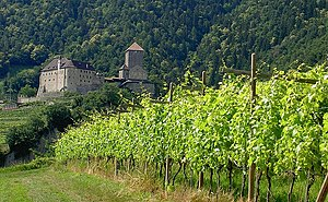 Trollinger - Vernatsch vineyard in the Trentino-Alto Adige region of Italy.