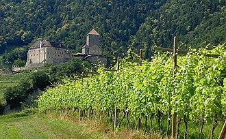 Trollinger - Vernatsch vineyard in the Trentino-South Tyrol region of Italy.