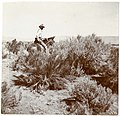 Vernon Orlando Bailey on horseback in Rabbit Hole Basin, Nevada, 1898.jpg