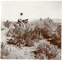 Vernon Orlando Bailey on horseback in Rabbit Hole Basin, Nevada, 1898.jpg