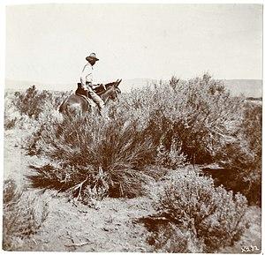 Vernon Orlando Bailey - Vernon Orlando Bailey in 1898