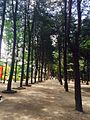 View of Nami Island.JPG