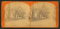 View of a tree-lined street, by C. A. Beckford.png
