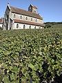 Vigne Pinot noir (Leuvrigny) Cl.J.Weber05 (23595251021).jpg