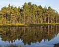 Viru Bog, Parque Nacional Lahemaa, Estonia, 2012-08-12, DD 69.JPG