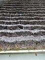 Vodní mlýn (Hoslovice), rákosová střecha na mlýně (2).JPG