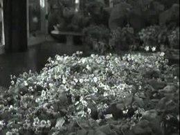 Bestand:Vroege aardbeien door bestraling met neonlicht-517068.ogv