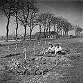 Vrouwen verzorgen de graven van Canadese militairen die zijn gesneuveld tijdens, Bestanddeelnr 900-2649.jpg