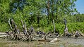 Vultures (31239470975).jpg