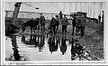 "WW1; stationary hospital, Rouen; ""chargers"" watering horses Wellcome L0024981.jpg"