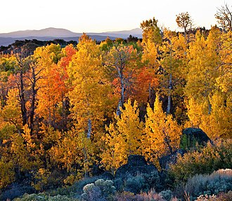 Cedarville, California - The Wall Canyon Wilderness Study Area, about 25 miles SE in Nevada, features a fine fall color display in mid-October.