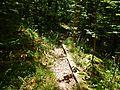 Wanderweg - panoramio (87).jpg