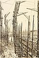 War Drawings by Muirhead Bone- the Seven Cranes Art.IWMREPRO00068450.jpg