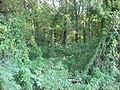 Weber Village Site, swamp.jpg
