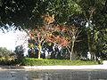 Weizmann's Grave IMG 2488.JPG