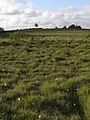 Wet heath to the east of Ferny Crofts, New Forest - geograph.org.uk - 468912.jpg