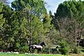 Where Silicon Valley's horses live - panoramio.jpg