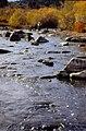 Wild trout project e walker river bridgeport0077 (26249928076).jpg