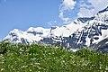 Wildflowers Mountains Sissu Lahaul Jul19 D72 10447.jpg