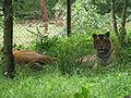 Wildlife Safari - 11.jpg