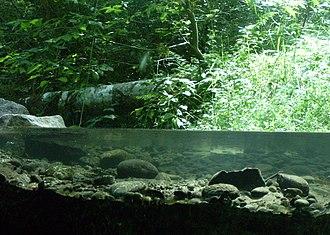 Wildwood Recreation Site - Underground stream viewing station at Wildwood Recreation site