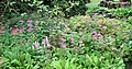 Winterbourne House Gardens 5 (27423319714).jpg