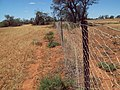 Wire fence Koorlong.jpg