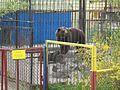 Wojtusia Braniewo zoo.jpg