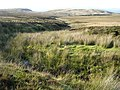 Wolf Burn, Campsie Fells - geograph.org.uk - 240626.jpg