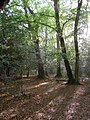 Woodland north of the North Gate, New Forest - geograph.org.uk - 173050.jpg