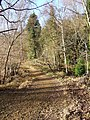 Wyre Forest footpath in Winter - geograph.org.uk - 650183.jpg