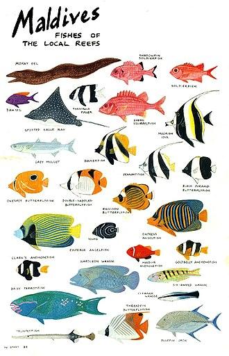 Xavier Romero Frías - Fishes of Maldives